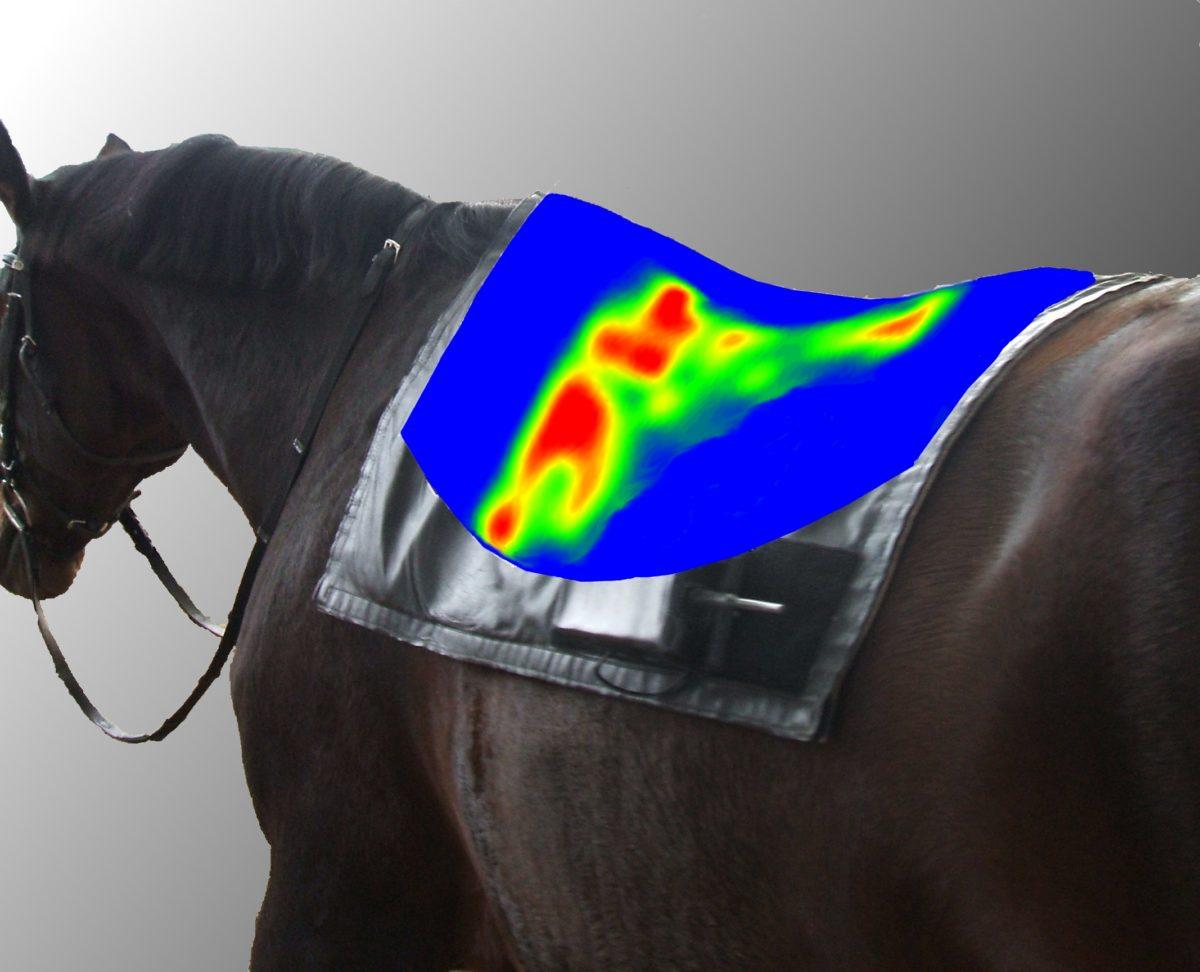 Pferd mit Druckverteilung auf den Rücken projeziert