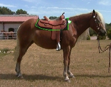 Glückliches Pferd mit Matte